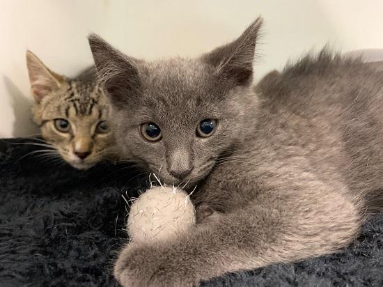 Adopt a Cat - Southampton Animal Shelter Foundation