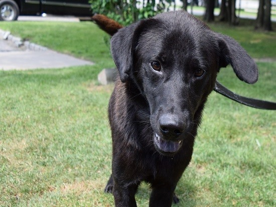 Adopt a Dog - Southampton Animal Shelter Foundation