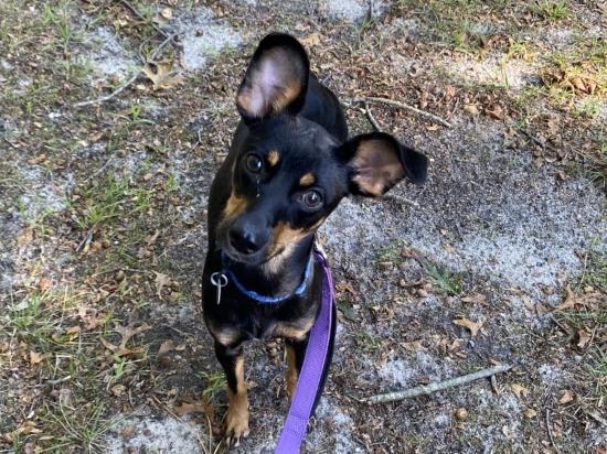 Adopt A Dog Southampton Animal Shelter Foundation