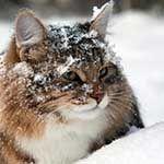 Advo-Cats