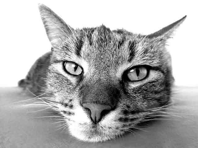 SASF Cat Cam
