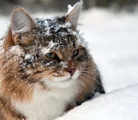 Advo-Cats: Helping The Feral Cat Population