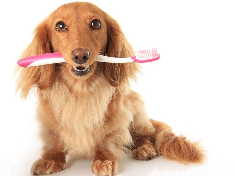 Low-Cost Pet Dentals